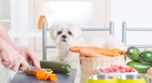 Dog Health Food