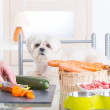 Dog Health Food