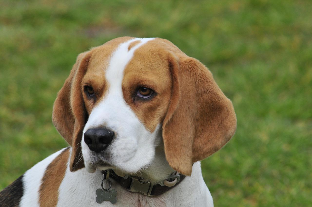 Pet Portraits – Why Professional Pet Portrait Artists Is Your Best Option