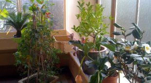 The Sweet Home and Plantes d'intérieur
